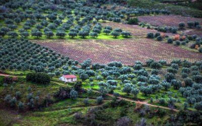 Cómo Aportar Nitrógeno a los Olivos en Ecológico (5 productos que funcionan)