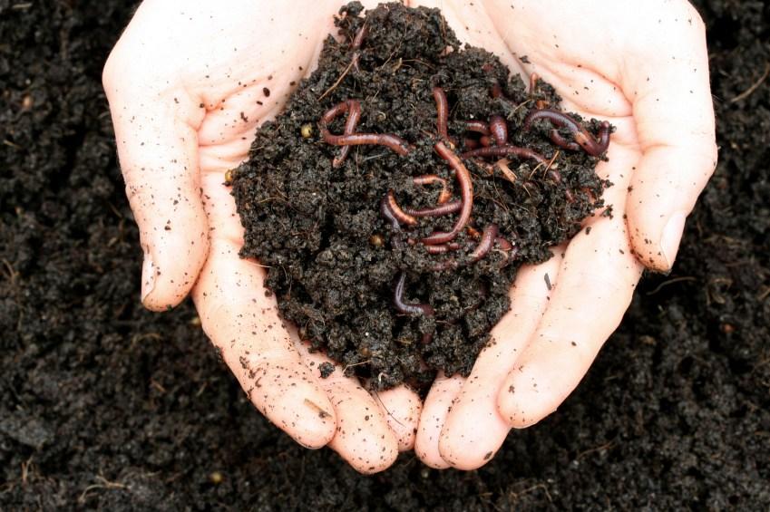 Humus de Lombriz. 10 cosas importantes que debes saber