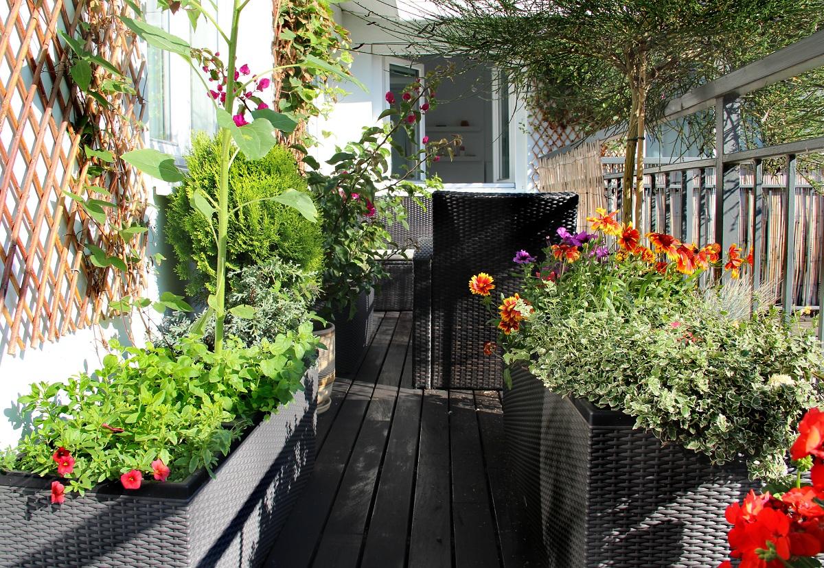 C mo crear un huerto urbano en el balc n de tu casa nostoc - Huerto en la terraza ...